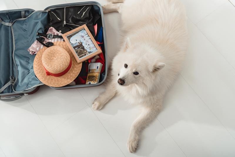 Experiences: Travel with your Pet and Stay at our Hotel in Seville